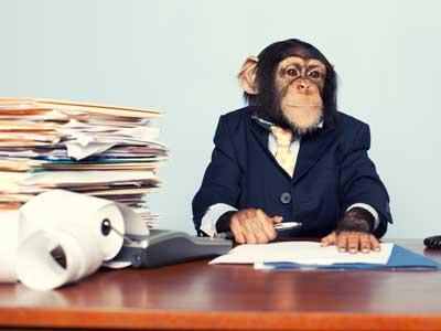 monkey-business-suit